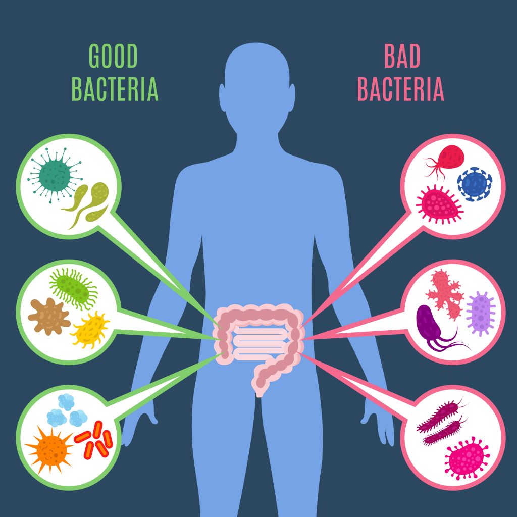 probiotics pacteria